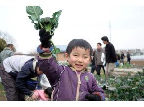 [神奈川縣,伊勢原]真正享受的養殖經驗的新鮮無農藥蔬菜形象