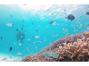 【福岡】体験ダイビング!【海まで往復送迎付き】の画像