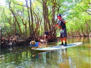 【沖縄・西表島】愛犬と一緒にSUP&ジャングル探検滝巡りコース