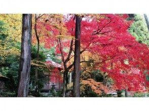 [京都葉秋的神秘之旅特產烤飯蛋糕]〜秋天的色彩指南將引導您的最佳圖像的秋葉