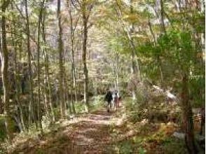 [岩手/田oh]穿过悬崖上富有表现力的森林!北山崎悬崖徒步旅行(2小时30分钟)