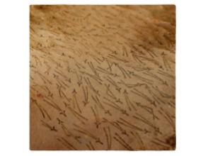 【京都・大原・染物体験】ハガキを型染!「柿渋染」体験プランの画像