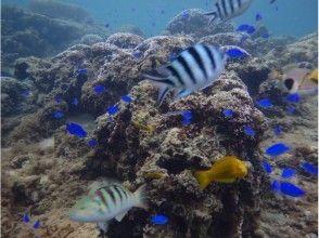 【沖縄・恩納村】ダイビング 熱帯魚コース