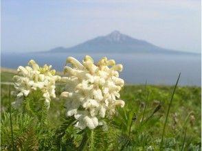 【北海道・礼文島】フラワーコースガイド(お花ガイド・桃岩展望コース)