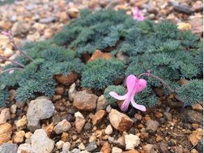 [長野Ikenotaira濕地]慢慢地理解,在濕地開花植物[Ikenotaira濕地花俳句]