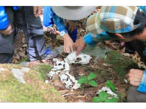 [Nagano/ Tateshina] A little geeky and interesting! Follow the traces of animals living in the mountains! Animal tracking