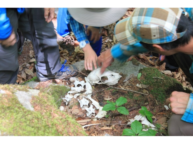 nagano tateshina following traces of animals living in the