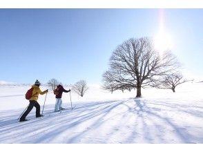 【東北・八幡平】クロスカントリースキー(1dayツアー)特製ランチつき!小学生からOK・自然を満喫