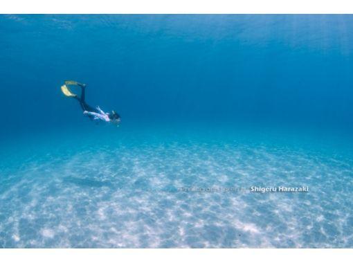 【屋久島 シュノーケリング】ウミガメ遭遇率90%の海でウミガメと泳ごう!手軽に参加できるシュノーケリングツアー!【地域共通クーポン取扱店】