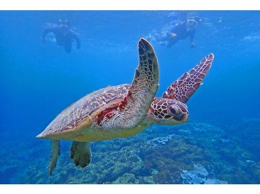 【屋久島 シュノーケリング】ウミガメと泳ごう!美しく豊かな屋久島の海で手軽に参加できるシュノーケリングツアー!【地域共通クーポン取扱店】