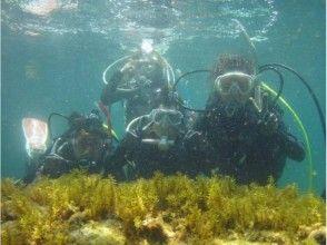 【福井・越前】越前ブルーの美しい海で体験ダイビングをしよう!たっぷり2ダイブプラン♪の画像