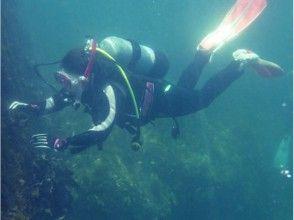 【和歌山】南紀ブルーの美しい海で体験ダイビングをしよう!たっぷり2ダイブプラン♪