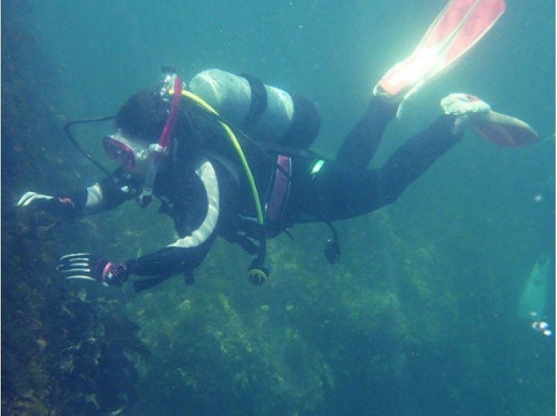 【和歌山】南紀ブルーの美しい海で体験ダイビングをしよう!たっぷり2ダイブプラン♪の紹介画像