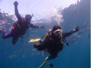 大分・つくみイルカ島生簀 体験ダイビング(水中写真プレゼント)の画像