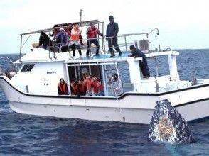 [沖繩總部離港]賞鯨(半天課程)※有圖像的全額退款系統※
