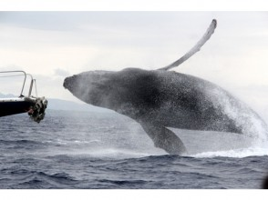 [沖繩總部端口發病]觀鯨半天課程(與美之海水族館門票)※有圖像的全額退款系統※