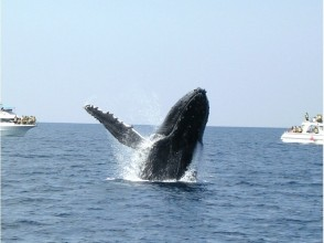 ※ There is a full refund system ※ [From Naha] Whale watching limited in winter! Tour to go see a whale on a fast boat