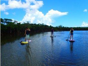 [Okinawa Ishigaki island] exploring the mangrove sap! Stroll through the rich nature of mangroves, flora and fauna!