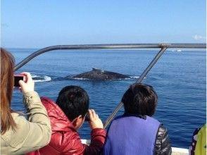 2018開始接受! [沖繩Nahakita濱海發病]賞鯨之旅受益!形象