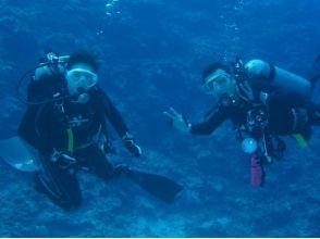 【沖縄・座間味】年中ベストコンディションの座間味で体験ダイビングの画像