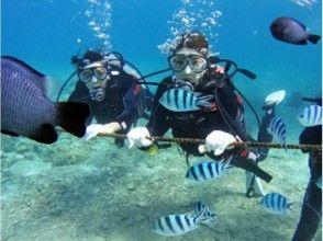 【沖縄・恩納村】青の洞窟を潜るボート体験ダイビング!餌付け体験付♪の画像