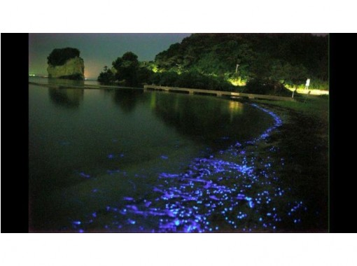 "[Ishikawa/ Noto] Recommended for couples and free study! ""Mystery of the Sea"" Sea Firefly Appreciation Tourの紹介画像"
