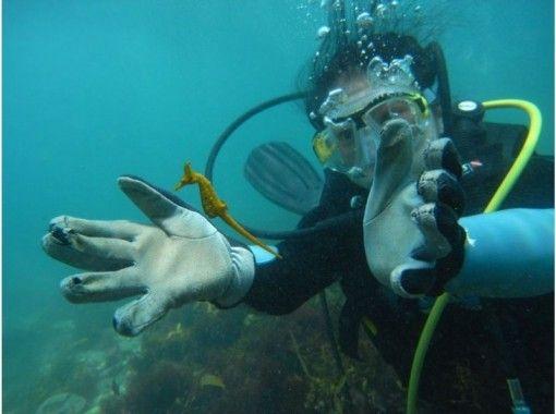 浅瀬でのんびり体験ダイビング♪