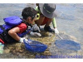 【沖縄・久米島】海の生きものたちに出会う〔海辺の散策と観察〕の画像