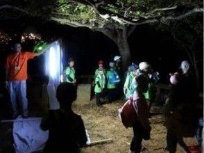 【沖縄・那覇】ライトトラップを仕掛けて夜に活動する虫たちを観察しよう!ガイドと一緒で夜でも安心!