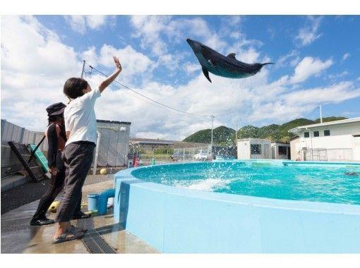【高知・室戸岬】イルカにサインを出してみよう!〔トレーナー体験〕