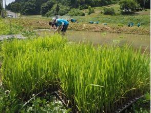 【福島・二本松市】自然とつながる農業体験!(田植え編)