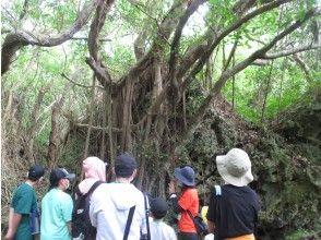 沖縄ジャングル体験【亜熱帯・ホロホローの森】ガイドツアー90分!森から海への散策コース。少人数実施・ファミリーにおすすめの安全なコース