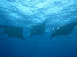 【Okinawa · Ishigakijima】 Manta snorkel & phantom island landing & Entourage snorkel & Taketomijima sightseeing 【1 day course】