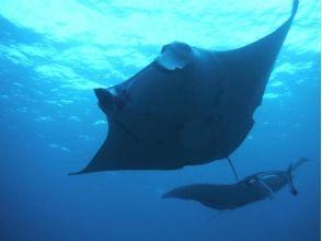【Okinawa · Ishigakijima】 Manta snorkel & phantom island landing & Taketomijima sightseeing 【1 day course】