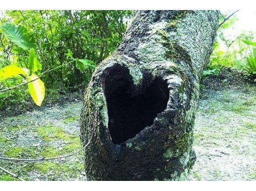 【沖縄・名護】観光ガイドツアー 「名護城(ナングスク)と自然を体感」城歩きコース