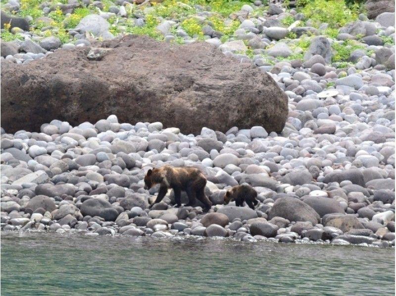 【北海道・知床】8時出航!爽やかな朝の野生動物探索クルーズ乗船☆ヒグマ高確率出没地帯「ルシャ湾」へ♪の紹介画像