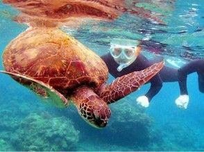 【鹿児島・屋久島】シュノーケリングでウミガメを探しに行こう(半日コース)