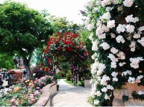 【山梨・河口湖】音楽のテーマパークでお姫様になろう♪ 〔プリンセス体験〕の画像