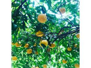 【Mie / Kumano】 Real Agricultural Experience = Image of Narawai Experience