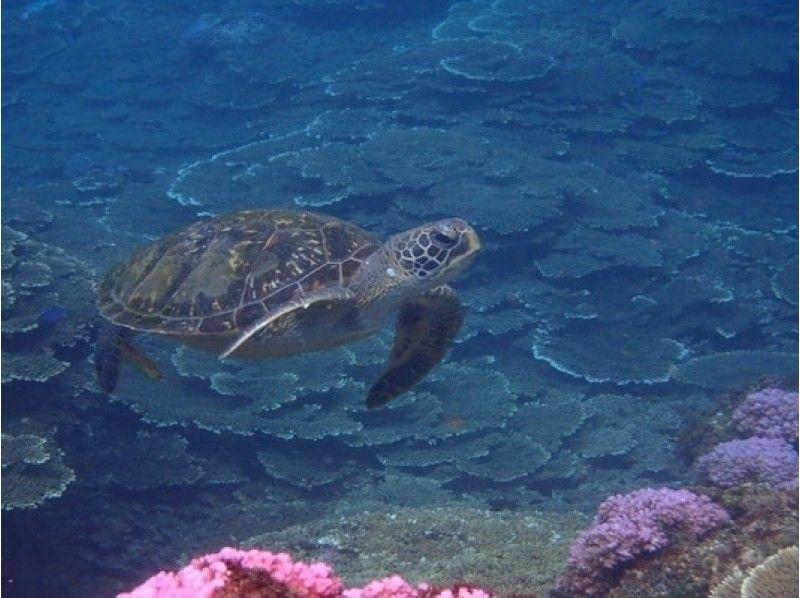 [東京八丈島]享受八丈藍!海灘和介紹圖像的浮潛