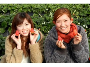 【Gunma · Numata】 You can enjoy from December to June! Image of strawberry picking ♪