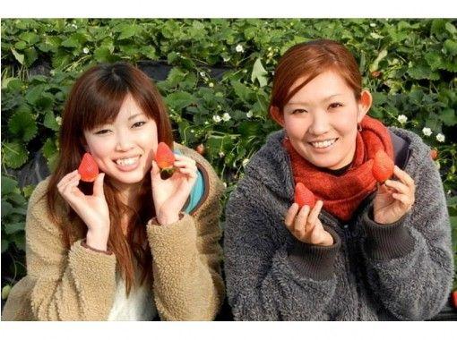 【群馬・沼田】赤く可愛いいイチゴ食べ放題!大人から子供まで楽楽いちご狩り!12月から6月まで楽しめます♪
