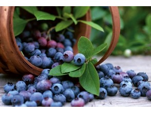 [Gunma / Numata] Highland jewels! All-you-can-eat blueberry hunting