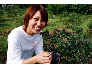 【Gunma · Numata】 The plateau's jewel! Blueberry hunting image