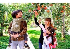 [Gunma / Numata] Enjoy the charm of fruits! Picking apples at a tourist fruit farm!