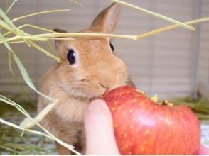 [โตเกียว Ikebukuro] 5 นาทีจากสถานีรถไฟ ได้รับพร้อมลองเล่นกับกระต่ายในร้านกาแฟกระต่าย! ภาพของ [1 ชั่วโมงแผนประสบการณ์]