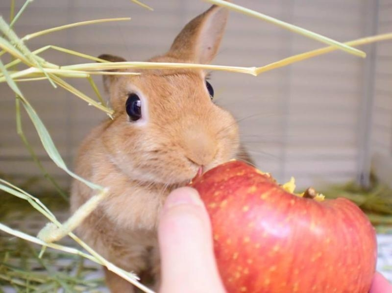 """[東京池袋]在兔子咖啡館和兔子一起玩吧!從池袋站步行5分鐘的"""" 1小時體驗計劃""""の紹介画像"""