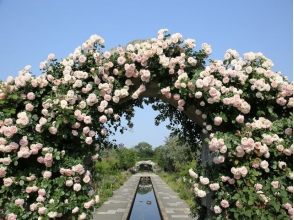 Seasonal flowers will bloom and compete! Gorgeous spring Rose Garden & Roses and Sweets Chateaux & Lunch Biking 【9830】