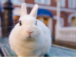 【Tokyo · Ikebukuro】 5 minutes from the station. Let's play with Rabbit-san at Rabbit Cafe! [1 hour private chart with a snack] image