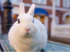 [โตเกียว Ikebukuro] 5 นาทีจากสถานีรถไฟ ได้รับพร้อมลองเล่นกับกระต่ายในร้านกาแฟกระต่าย! ภาพของ [1 ชั่วโมงอาหารว่างแผนเหมากับ]